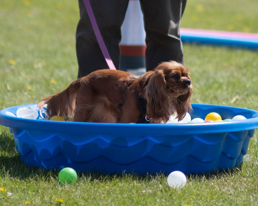 Natural Dog Show 2019 | Stonham Barns
